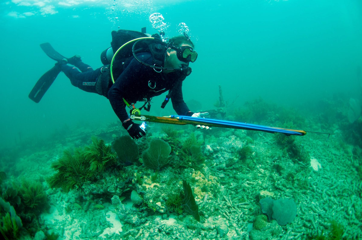 Scuba diver spearfishing off duck key florida for Best places to fish in florida without a boat